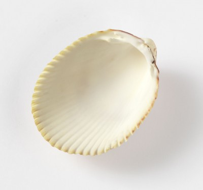 how to cook a cockle clam